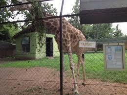 University of Ibadan Zoo